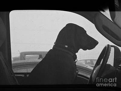 Photograph - Driving Ms. Daisy by Marcia Lee Jones