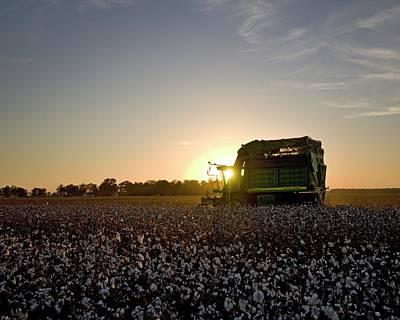 Cotton Photograph - Driving Sunset by David Zarecor