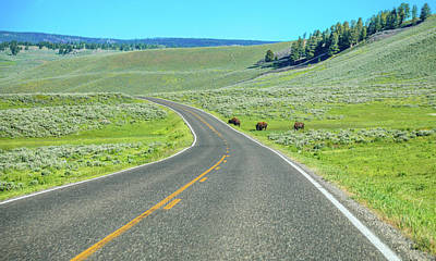 Photograph - Driving Through Lamar Valley Yellowstone by Dan Sproul