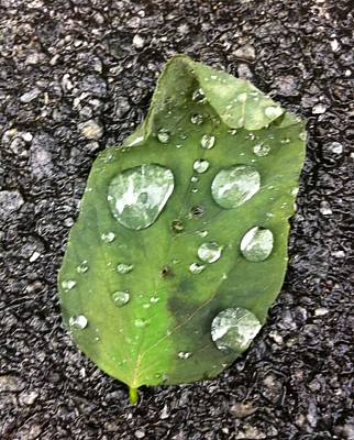 Photograph - Drizzle by Sandra Cutrer