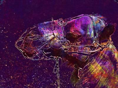 Dromedary Digital Art - Dromedaries Animals Lanzarote  by PixBreak Art