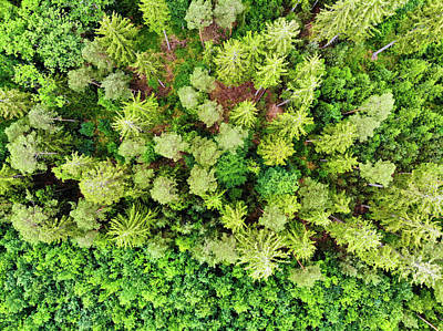 Photograph - Drone Photography Green Trees From Above by Matthias Hauser