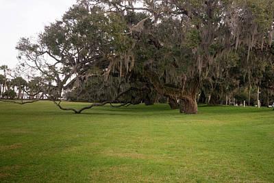 Photograph - Drooping Limb Southern Live Oak by Douglas Barnett