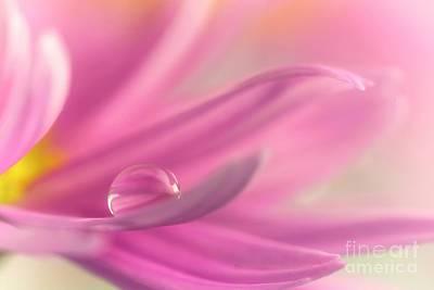 Flower Gardens Photograph - Drop II by Veikko Suikkanen
