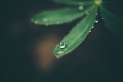 Photograph - Droplet 2 by Tracy Jade