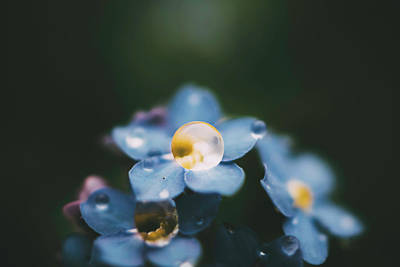 Photograph - Droplet 3 by Tracy Jade
