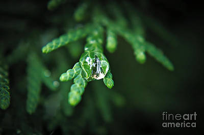 Photograph - Droplet by Cendrine Marrouat