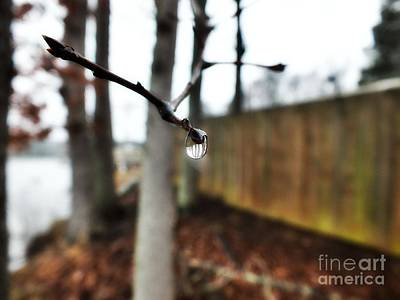 Photograph - Droplet by Christy Ricafrente