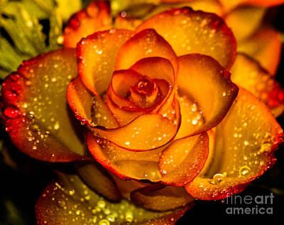 Droplet Rose Art Print