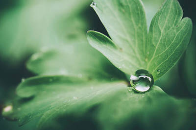 Photograph - Droplet by Tracy Jade