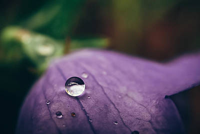 Purple Rain Photograph - Droplet by Tracy  Jade