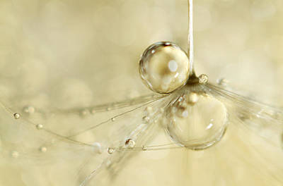 Droplets In Gold Art Print