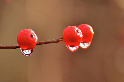 Photograph - Droplets by Nancy Landry