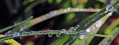Photograph - Droplets Of Life by Christopher McKenzie