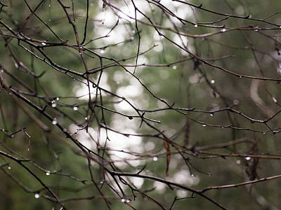 Droplets On Branches Art Print