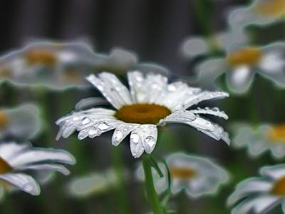 Droplets On Daisies Art Print by Emily Michaud
