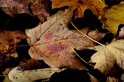 Print featuring the photograph Droplets On Fallen Leaves by Doris Potter