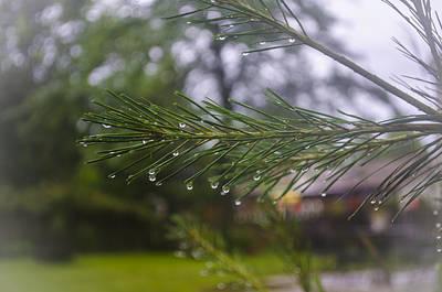 Photograph - Droplets On Pine Branch by Deborah Smolinske