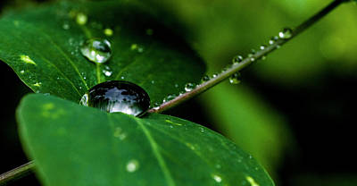 Print featuring the photograph Droplets On Stem And Leaves by Darcy Michaelchuk
