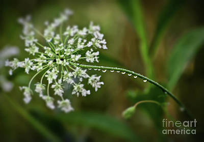 Photograph - Droplets On The Stem by Kerri Farley