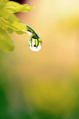 Drops Of Colorful Reflection Art Print by Laura Mountainspring