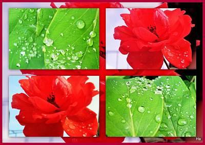 Digital Art - Drops Of Dew With Roses by Halina Nechyporuk