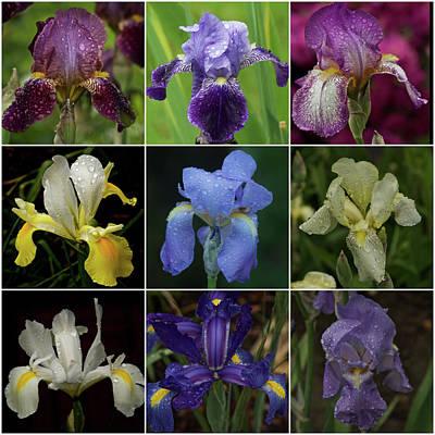 Drops Of Iris -- A Collage Art Print by Richard Cummings