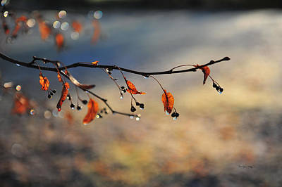 Photograph - Drops Of Light by Randi Grace Nilsberg