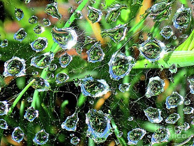 Drops Of Reflection Art Print