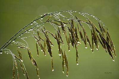 Photograph - Drops Of Water On Grass by Christina Rollo