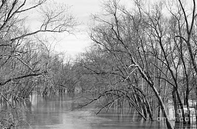 Drowning Trees Print by Lee Alexander