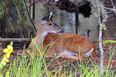 Art Print featuring the photograph Drowsy Deer by Al Powell Photography USA