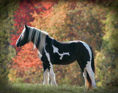 Drum Horse Photograph - Drum In Fall by Laurie Comfort