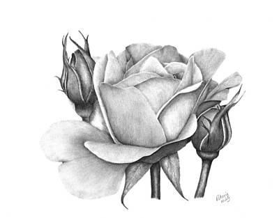 Drawing - Drum Rose by Patricia Hiltz
