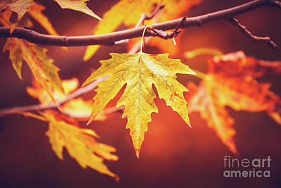 Photograph - Dry Autumn Leaves by Anna Om
