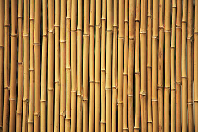 Dry Bamboo Rows Art Print by Brandon Tabiolo - Printscapes