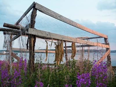 Photograph - Dry Cod by Tamara Sushko