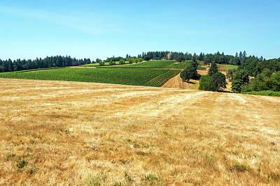 Pinot Noir Photograph - Dry Field And Vineyards by Jess Kraft