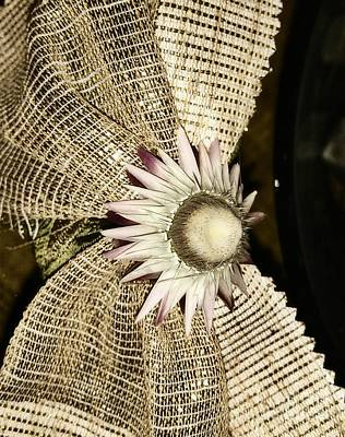 Photograph - Dry Flower 2 by Erika H