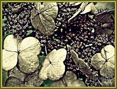 Photograph - Dry Hydrangea by Sarah Loft