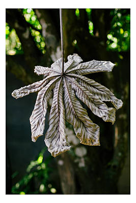 Dry Leaf Collection 1 Art Print