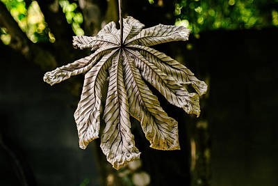Dry Leaf Collection 2 Art Print