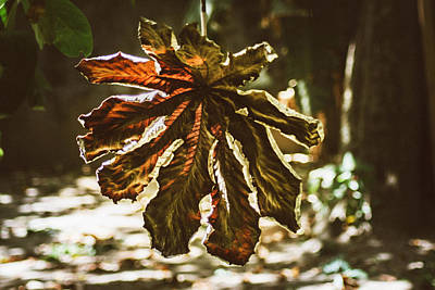 Dry Leaf Collection 3 Art Print