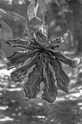 Dry Leaf Collection Bnw Art Print