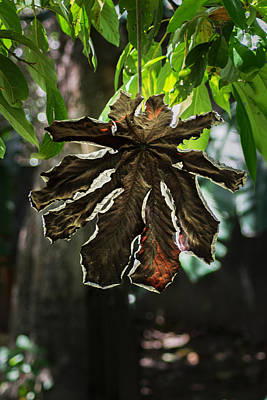 Dry Leaf Collection Art Print