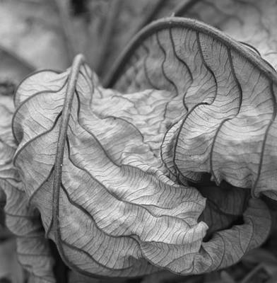 Wall Art - Photograph - Dry Leaf by Mary McGrath