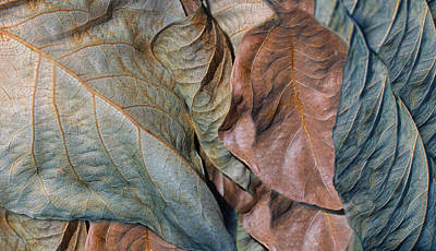 Photograph - Dry Leaves Abstract Blue by Jennie Marie Schell