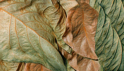 Photograph - Dry Leaves Abstract Green by Jennie Marie Schell
