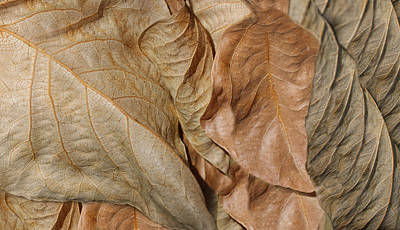 Photograph - Dry Leaves Abstract by Jennie Marie Schell