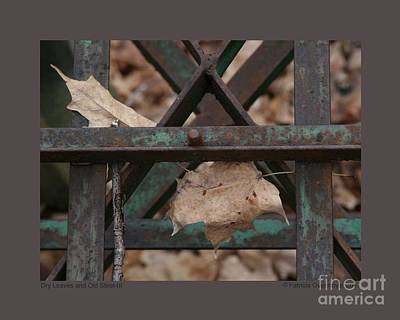 Photograph - Dry Leaves And Old Steel-iii by Patricia Overmoyer